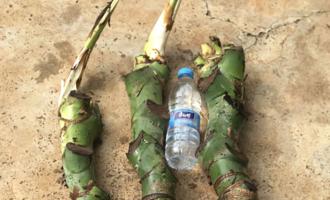 瓶子粗的龟背竹,怎么养的?大神无意说出1个窍门,你也能做到