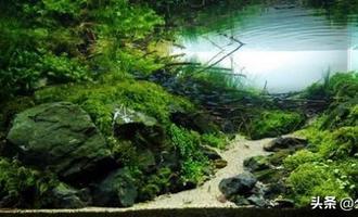 想拥有完美的水草缸,布景其实很重要,8种形式,助你胸有成竹
