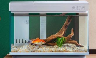 小米又上新鱼缸了,7个方面说一说,看看是不是懒人神器