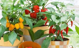 超长假期太无聊,想吃蔬菜又涨价?自己动手,阳台变菜园