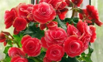 """过年期间,留好4种""""废壳"""",用来养花,根壮叶绿花大色艳"""