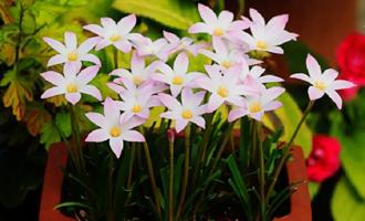 此花适合夏天养,便宜皮实还好看,似兰非兰,刮风下雨就爆花
