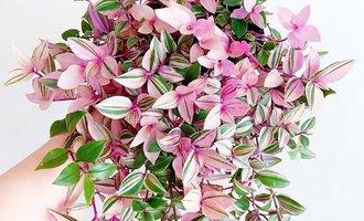 六种花草,适合吊起来养,比吊兰更美,比绿萝更容易爆盆