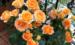 阳台养花,首选果汁阳台,病虫少易爆盆,一年开花300天