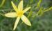 6种植物,名字比诗还美,真实身份却是野草,别再挂念了