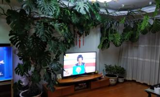 这4种花草,懂花的人不会养在客厅,你家有没有?