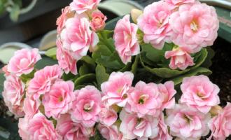 """9月逛花市,6种花""""值得买"""",开花一茬接一茬,养着轻松又带劲"""