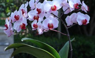 4种花别用土养,一浇水就烂根,最后1种很神奇,倒挂空中也开花