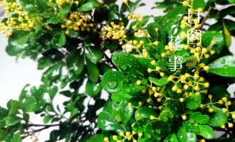 """9种花,12月要""""控水、断肥"""",不注意烂根黄叶,活不到开春"""
