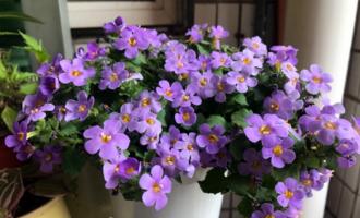 """冬天养花,""""5种水""""坚决别浇,浇了不长个,还黄叶!"""