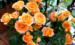 实图详解,3种类型的月季冬剪方法,开春冒强笋,开花大又密!