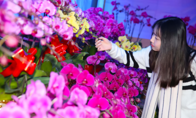 """3种花,被老上海称为""""金银财宝"""",过年养一盆,寓意好年味足!"""