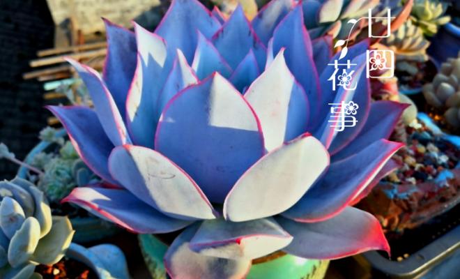 """8种蓝色多肉植物,高冷优雅,总有一种是你的""""蓝颜知己"""""""