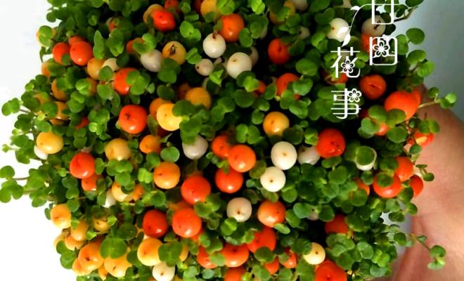 """春节不要只买""""花"""",试试这8种""""果"""",红彤彤金灿灿,喜庆!"""