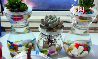 """真正适合长期水培的花,是这6种,其余水培是""""受罪"""",玩玩就好"""