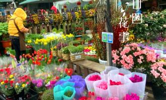 花贩子不小心说漏嘴的秘密:4种花再漂亮也别买,买了只会添堵