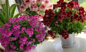 夏天难养活的花,天一热就容易出问题,四月份就别入手了
