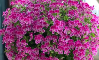 夏天将至,养些耐热耐晒的花,不用挪来挪去,晒晒花更多