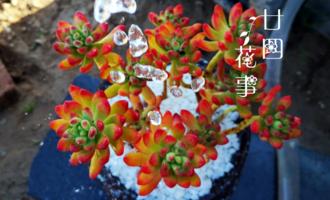 7种喜水花,夏天离不开水,水足长得旺水少易萎蔫,浇水党有福了