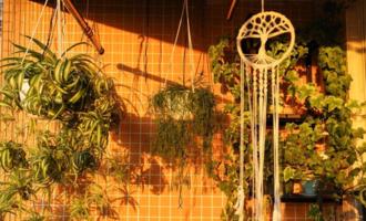 适合垂吊的花草,省空间上档次,比绿萝更美,比吊兰更容易爆盆
