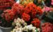 家养长寿花,八月底做件事,做到位复花容易,耽误了年底难见花