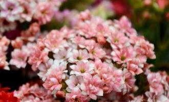 """秋天播种7种花,好养花量大,明年阳台成花海,实现""""鲜花自由"""""""