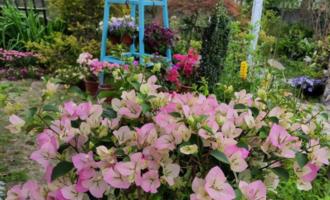 """家有小院,就养七种""""耐寒花"""",从秋到春不寂寥,冬天也有花看"""