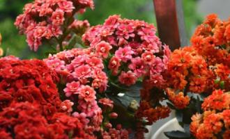 """被""""坑""""出来的经验:花市遇见4种花,别轻易买,容易缴智商税"""